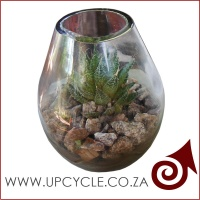 robertson-wine-bottle-upcycled-planter-bg_1914715658
